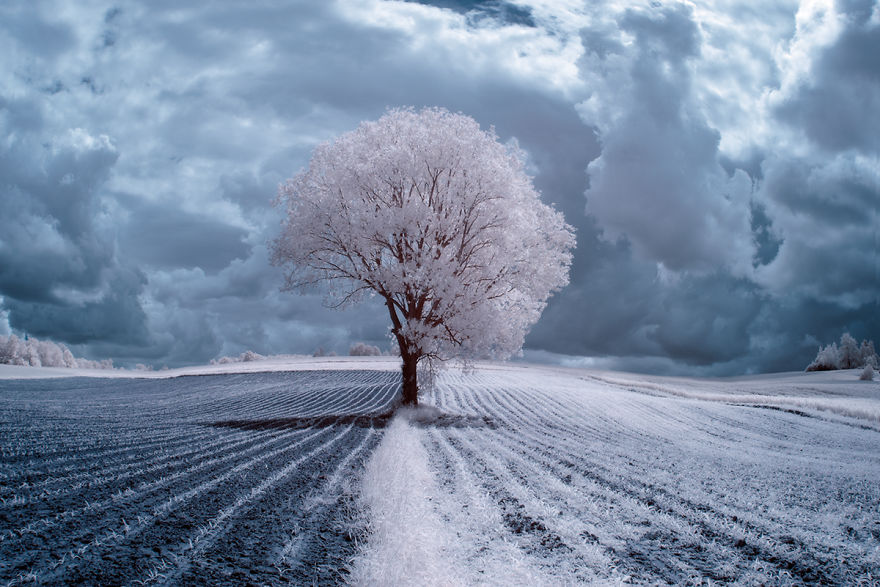 infrared-photography1