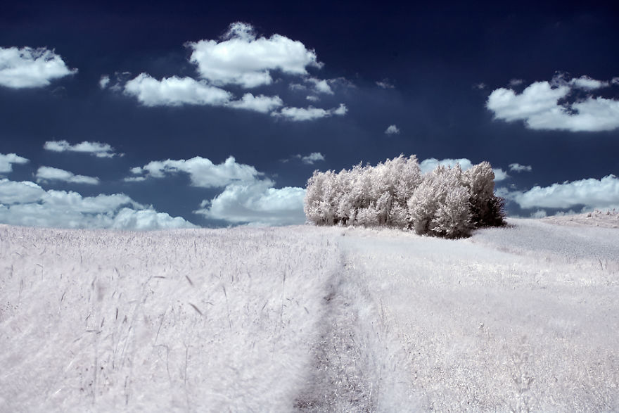 infrared-photography6