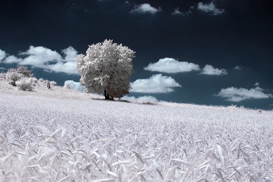 infrared-photography8