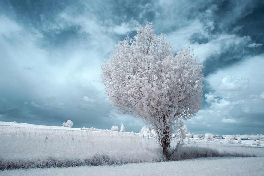 infrared-photography9