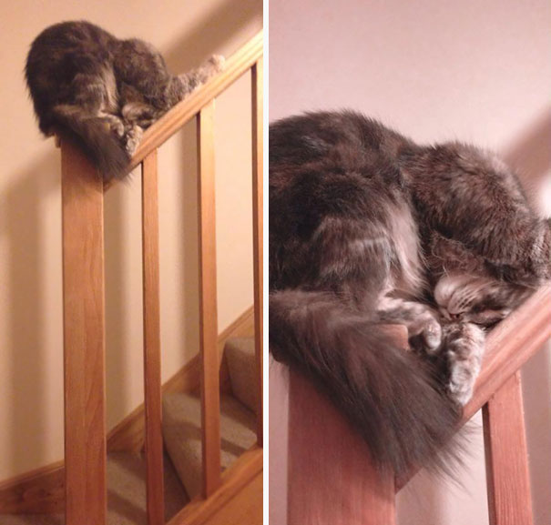sleepingcats2