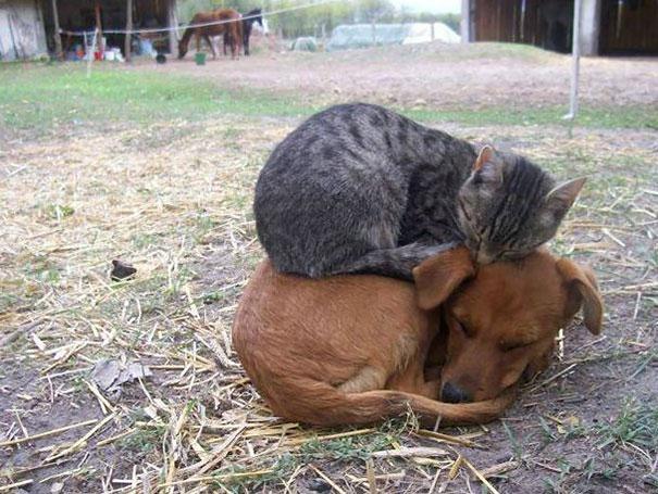 sleepingcats4