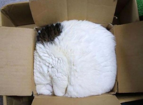 sleepingcats5