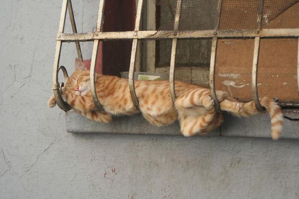 sleepingcats6