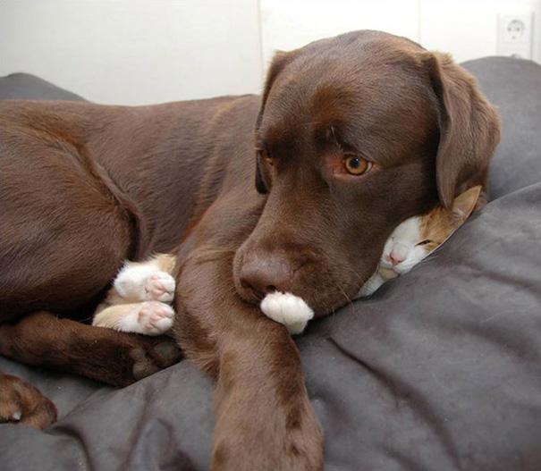 sleepingcats9