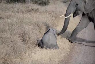 isterika-slonenka