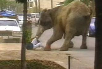 sloniha-tyke