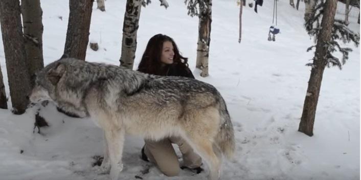 daniel-i-volk