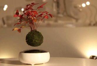 neobychnyj-vozdushnyj-bonsaj-1