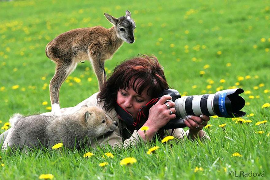 zhivotnye-kotorye-hotyat-stat-fotografami-1