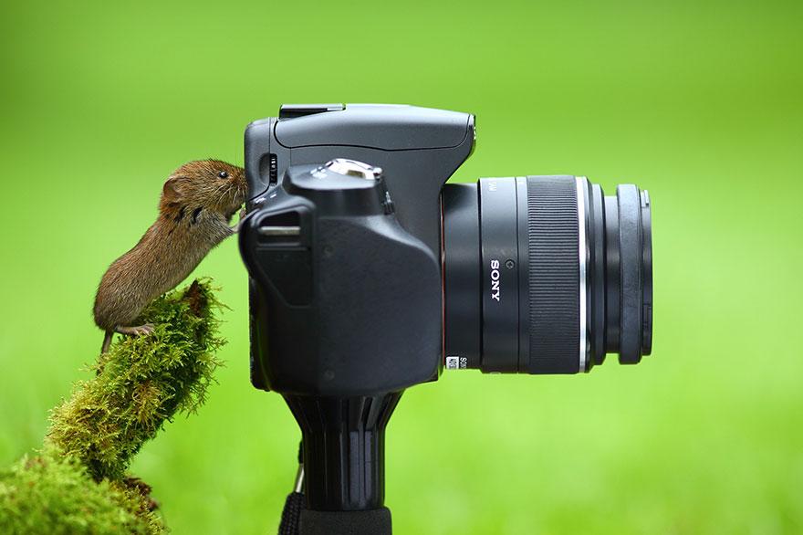 zhivotnye-kotorye-hotyat-stat-fotografami-10