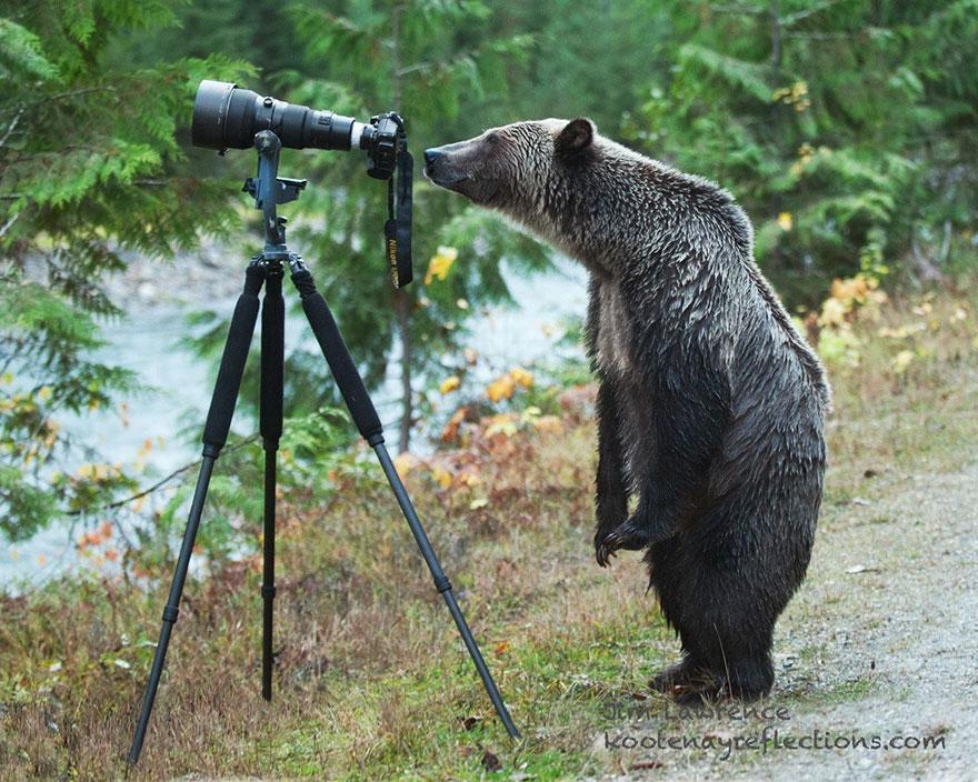 zhivotnye-kotorye-hotyat-stat-fotografami-11