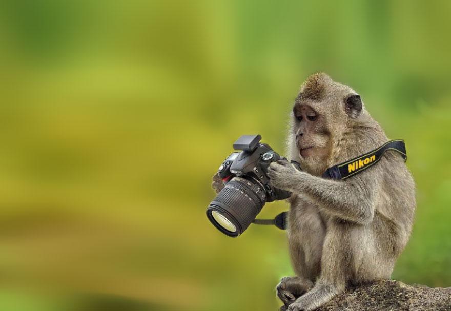 zhivotnye-kotorye-hotyat-stat-fotografami-12