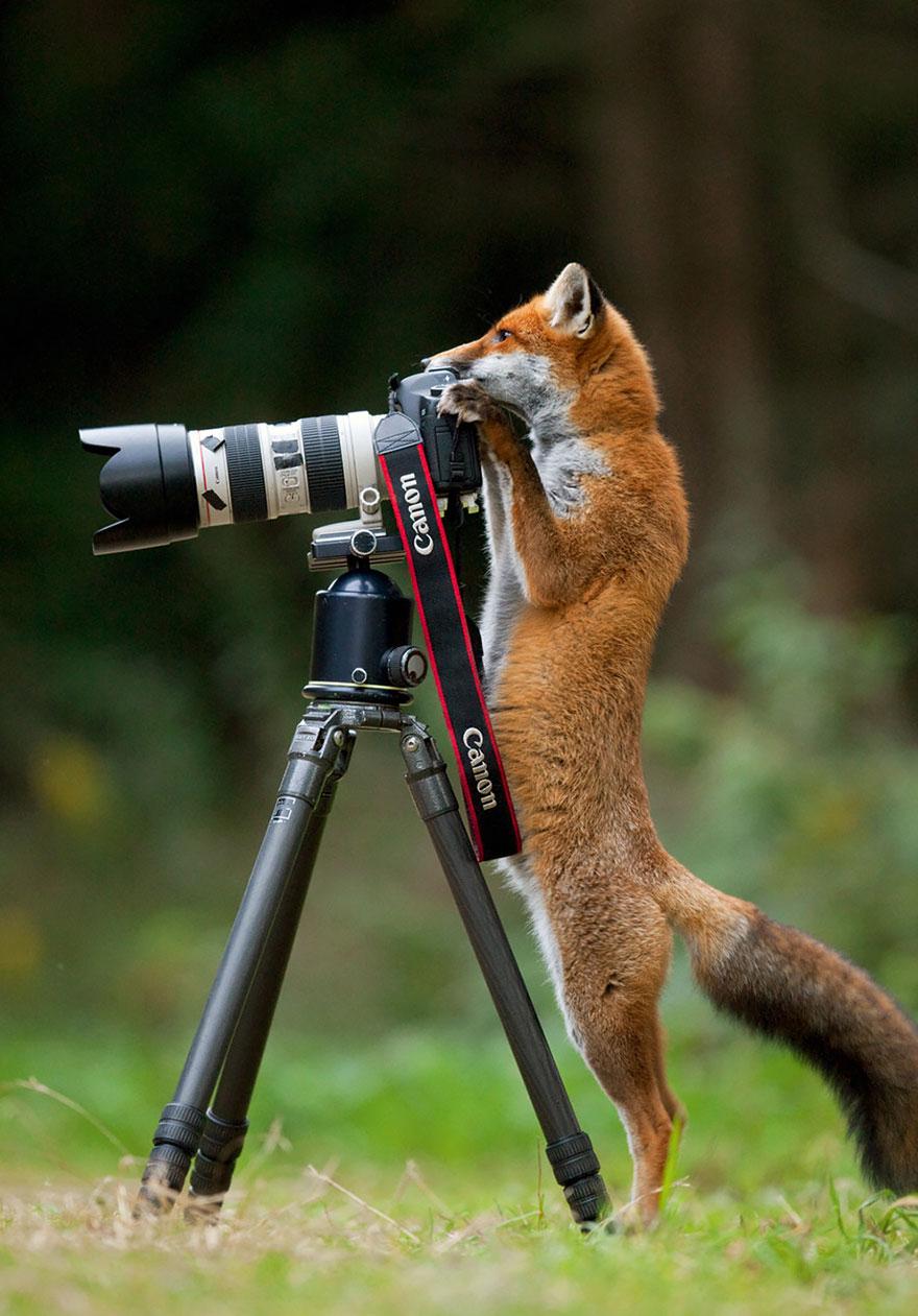 zhivotnye-kotorye-hotyat-stat-fotografami-14