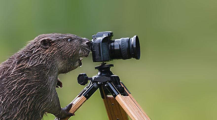 zhivotnye-kotorye-hotyat-stat-fotografami-19