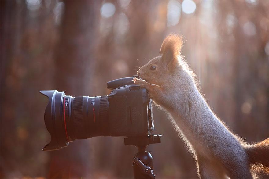 zhivotnye-kotorye-hotyat-stat-fotografami-20