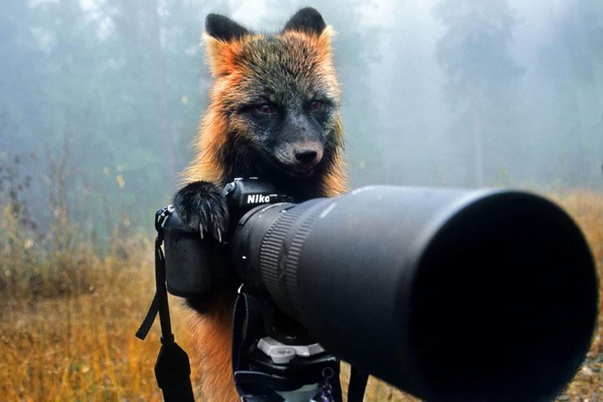 zhivotnye-kotorye-hotyat-stat-fotografami-21