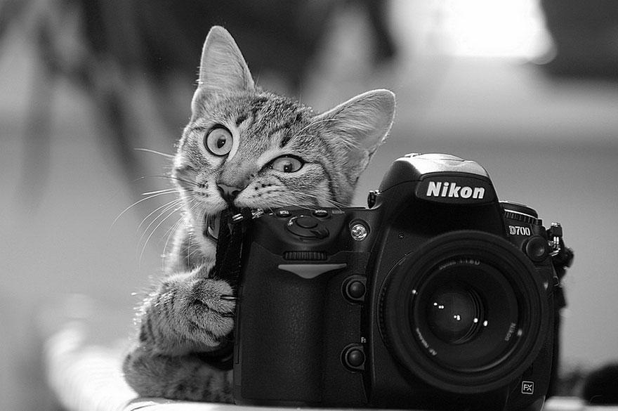 zhivotnye-kotorye-hotyat-stat-fotografami-22