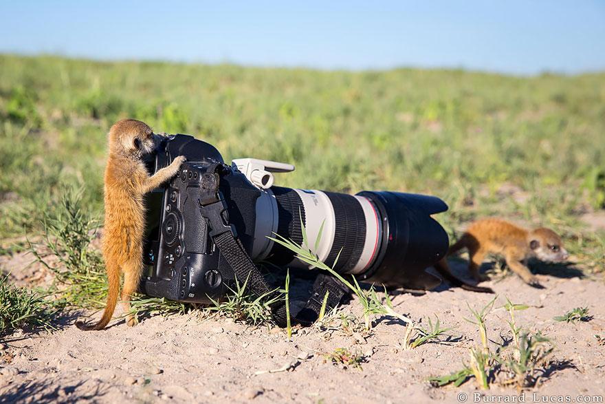 zhivotnye-kotorye-hotyat-stat-fotografami-8