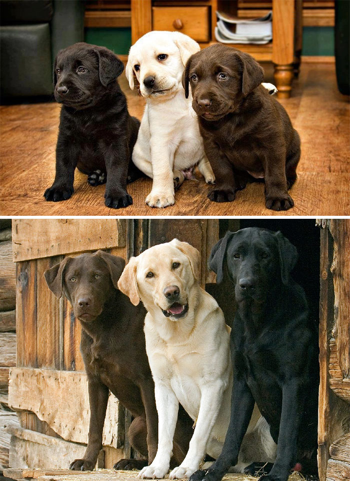 animal-growing-up-together-2