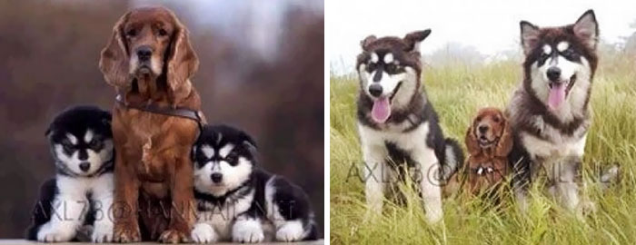 animal-growing-up-together-4