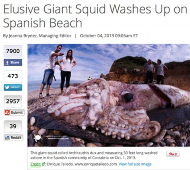 3AF7EAE000000578-3985154-One_was_an_image_of_a_normal_sized_squid_washed_up_in_Spain-m-24_1480970665232