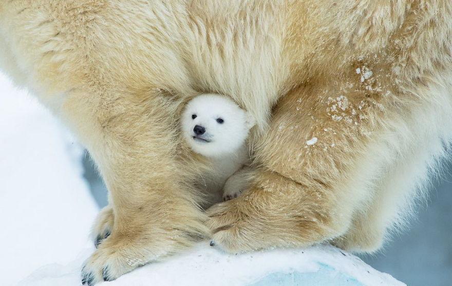 Bear-Parenting-57e3a65de5740__880