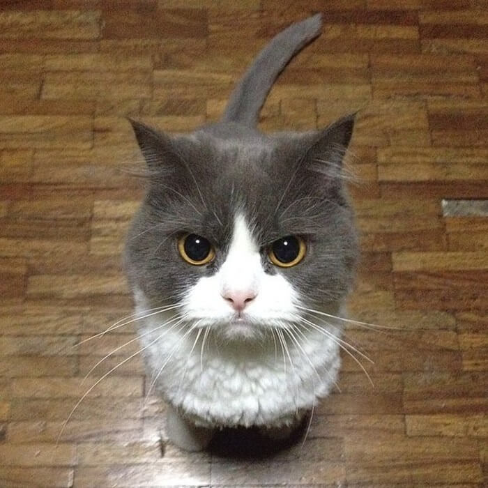 angry-cat-4