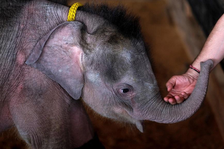 baby-elephant-03