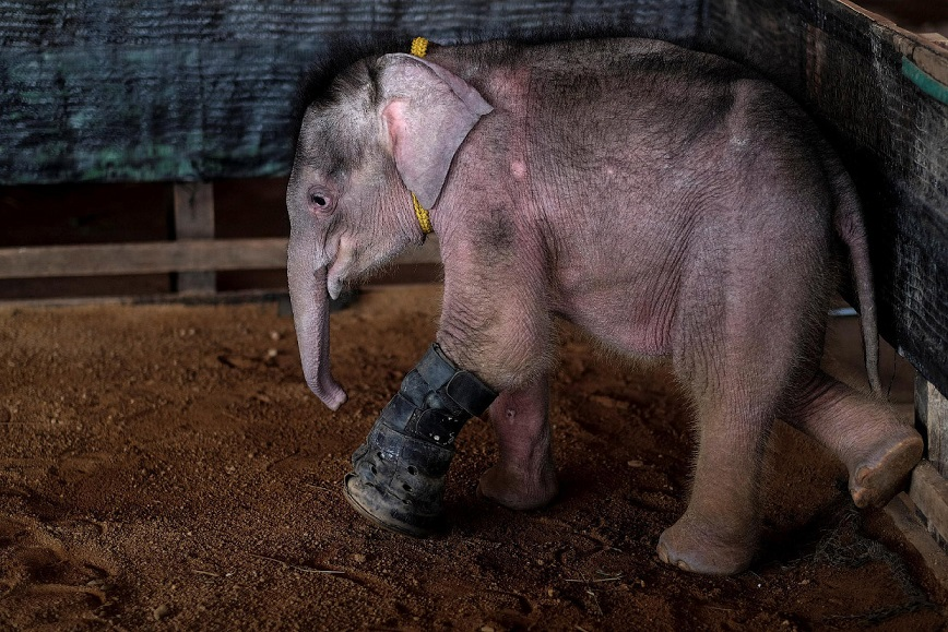 baby-elephant-081