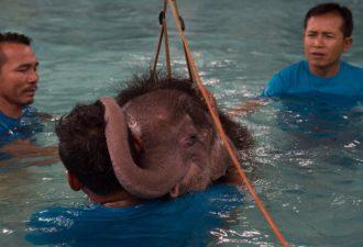baby-elephant-171
