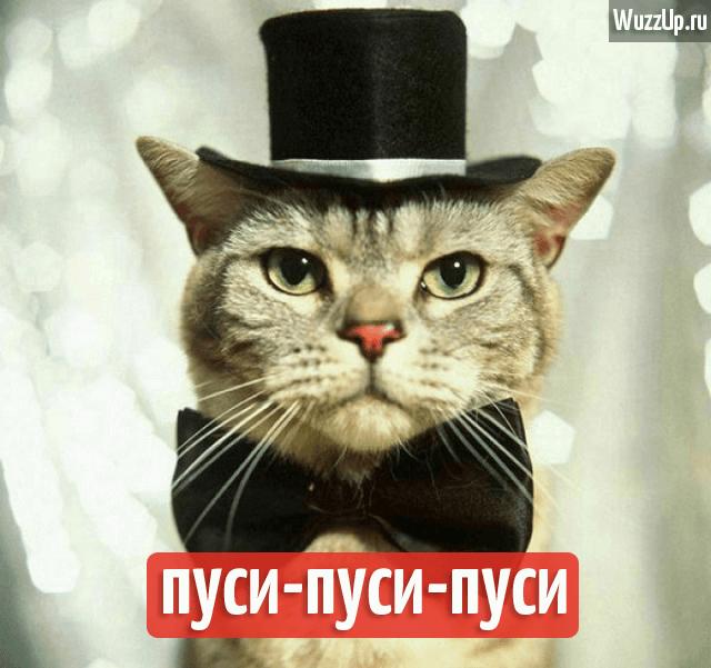 cat-angl