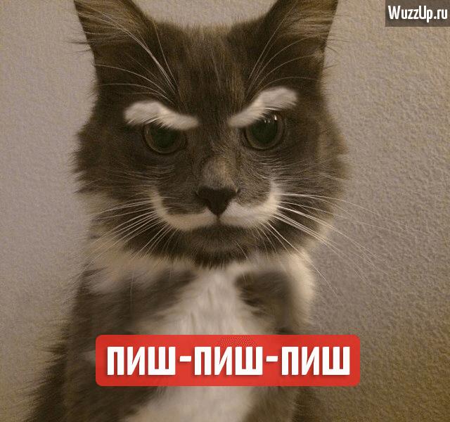cat-azer