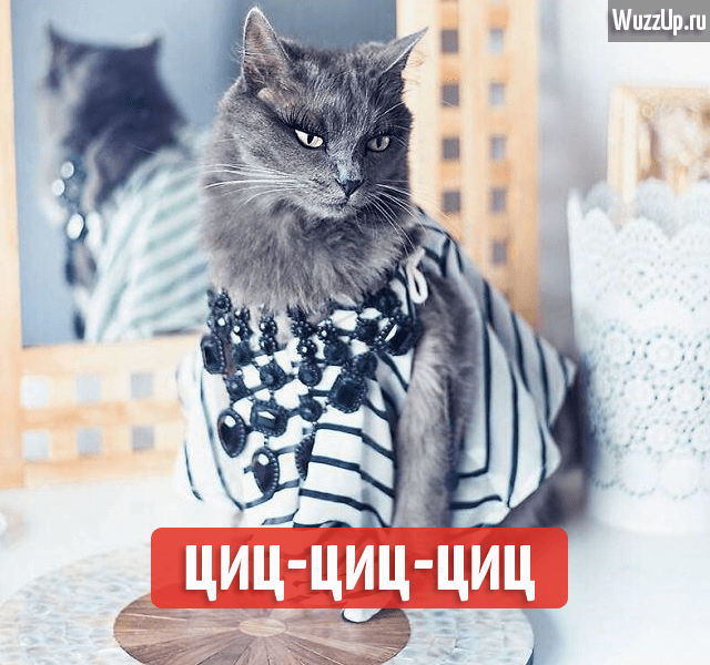 cat-vengr
