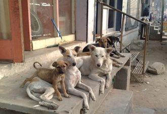 девочку спасли собаки