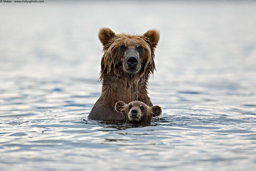 mother-bear-cubs-animal-parenting-1-57e3a1e10f99c__880
