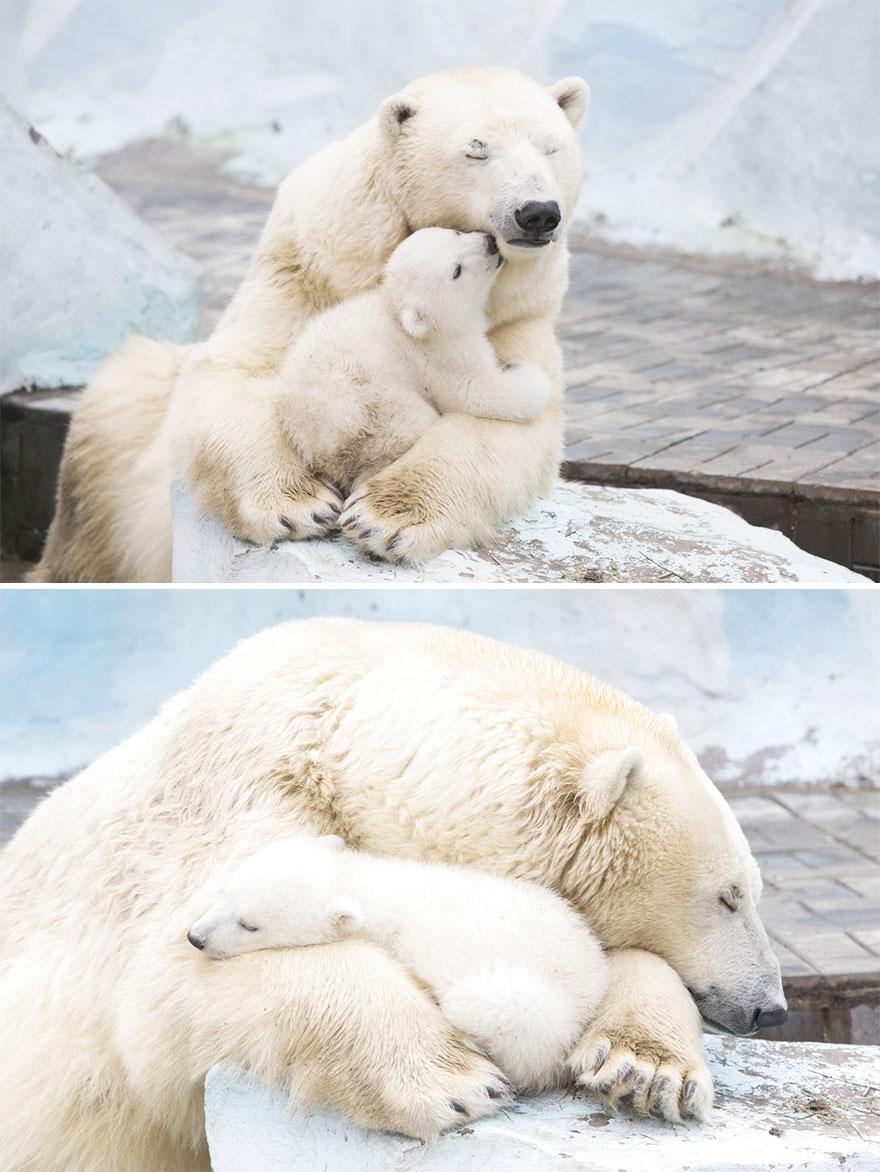 mother-bear-cubs-animal-parenting-44-57e3c7f4e03f5__880
