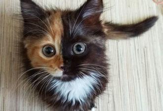 yana-cat-1