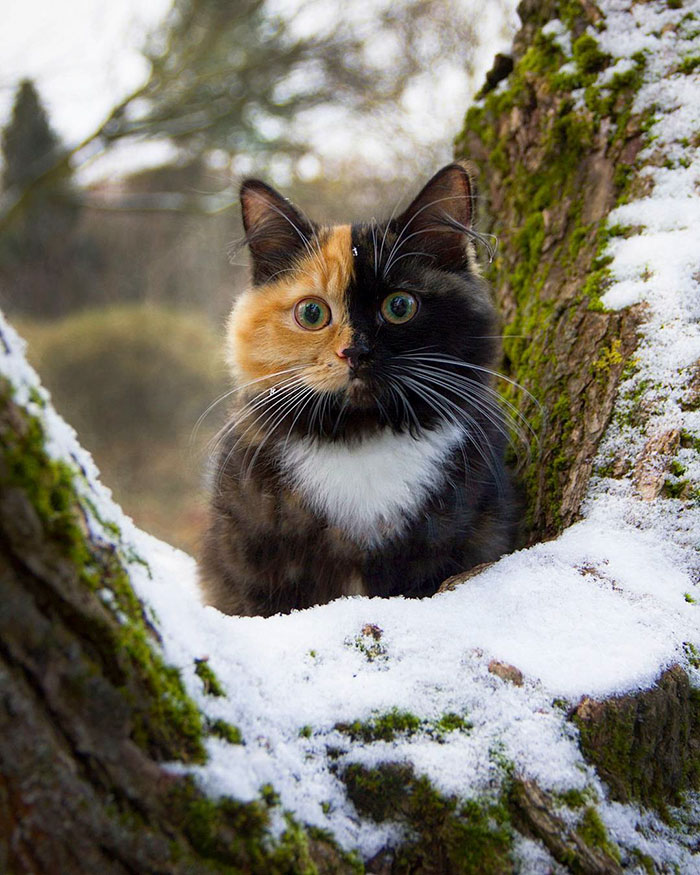 yana-cat-4