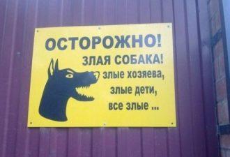 angry-dog-9