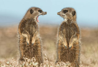 comedy-wildlife-photography-awards-shortlist-2016-2-57fb409517e2f__880