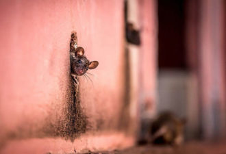 national-geographic-photo-of-the-day-internet-favorites-2015-23__880