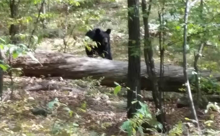 nezadolgo-do-smerti-bear