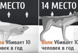 1492153023_snimok-ekrana-2017-02-17-v-13.36.39-696x361
