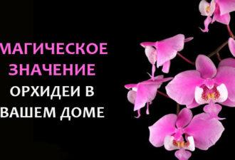 crop_167874260_MeIfZC