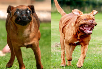 dogs-running2