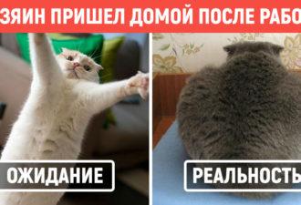 qs-cat