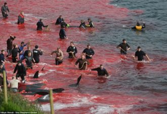 2AD0010D00000578-3173617-Killing_Locals_wade_out_in_wetsuits_and_use_ropes_to_catch_the_w-a-58_1437762253212