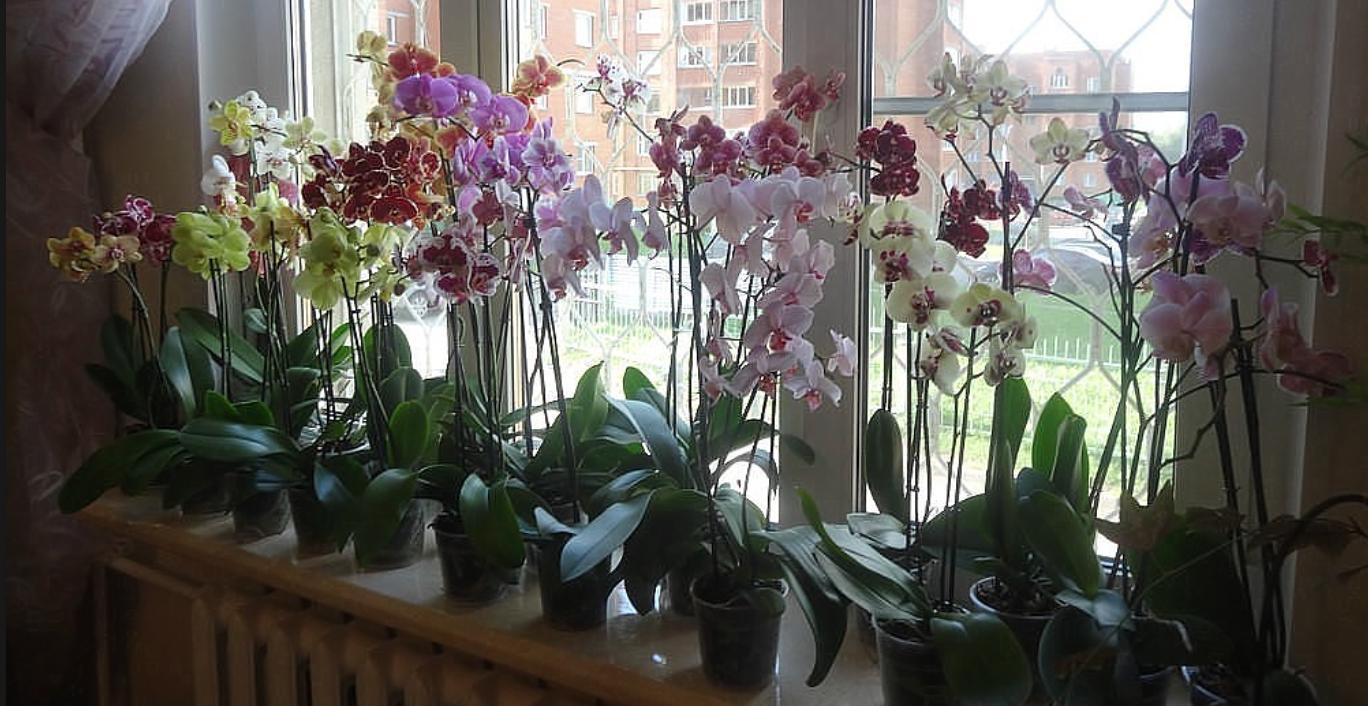 Орхидея что значит этот цветок