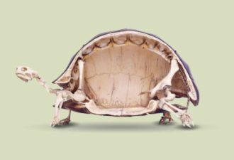 skelet-cherepaxi
